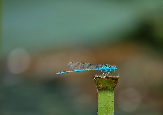 no-person-dragonfly-nature-outdoors-insect picture material