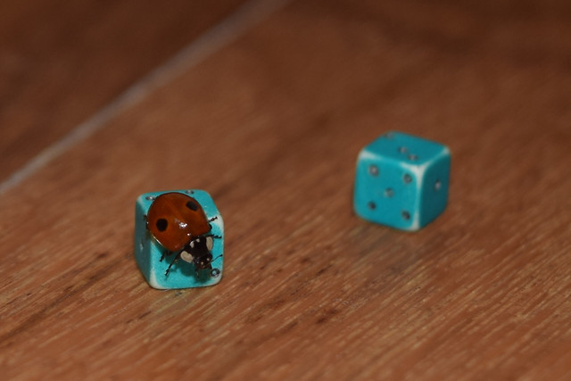 dice-toy-game-wood-gambling picture material