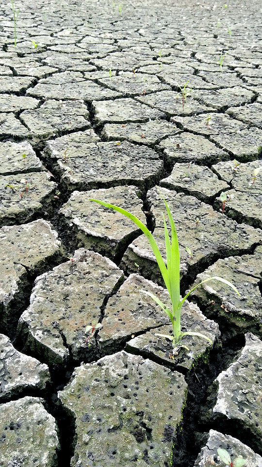 ground-earth-surface-drought-texture-stone picture material