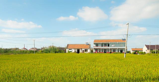 farm-agriculture-field-landscape-sky picture material