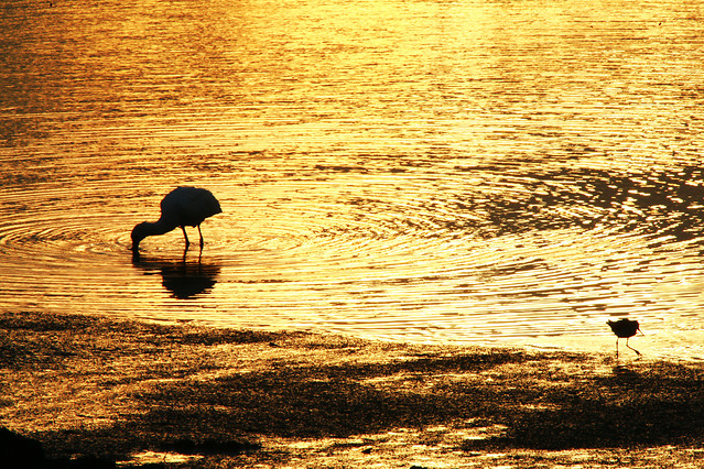 water-bird-sunset-reflection-lake 图片素材