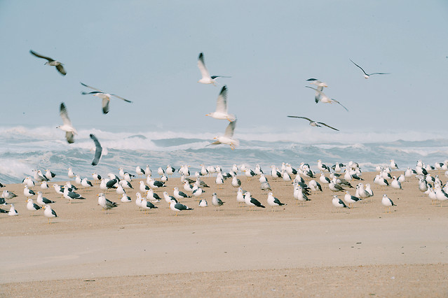 bird-wildlife-seagulls-water-sand 图片素材