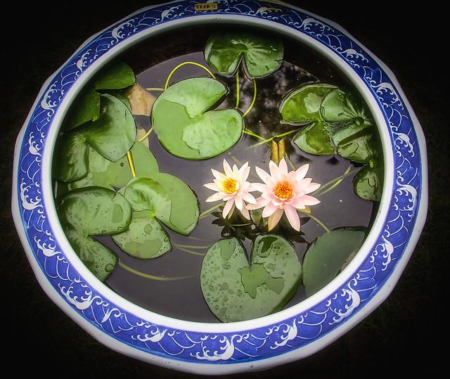leaf-food-no-person-desktop-flower 图片素材