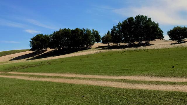 golf-landscape-tree-grass-no-person picture material