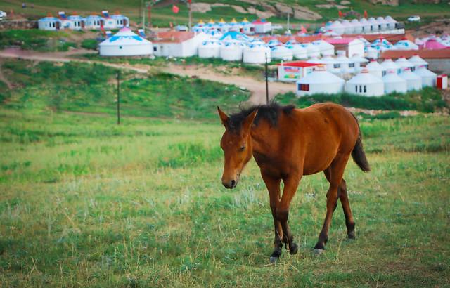 horse-mammal-mare-cavalry-farm picture material