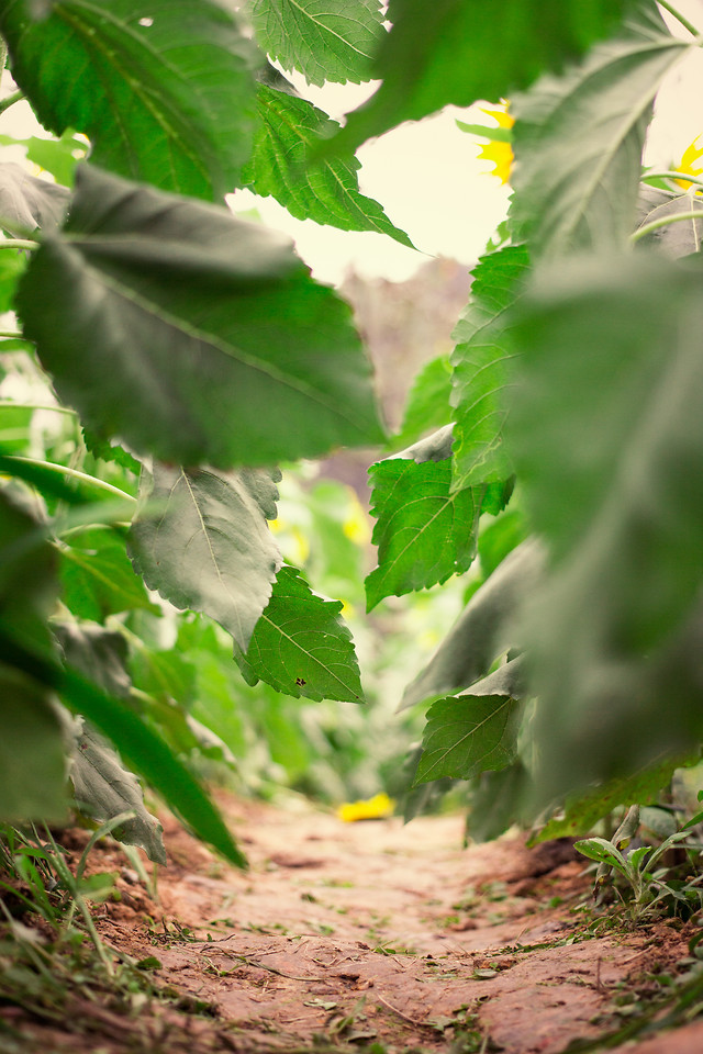 leaf-nature-no-person-growth-flora picture material
