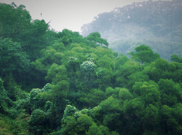 nature-rainforest-leaf-tree-vegetation 图片素材