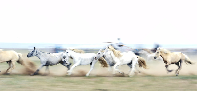 horse-mammal-equine-cavalry-animal picture material