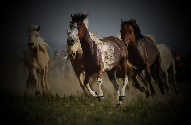 cavalry-mammal-horse-mare-stallion picture material