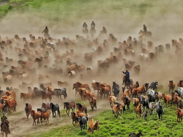 mammal-cavalry-herd-group-livestock picture material