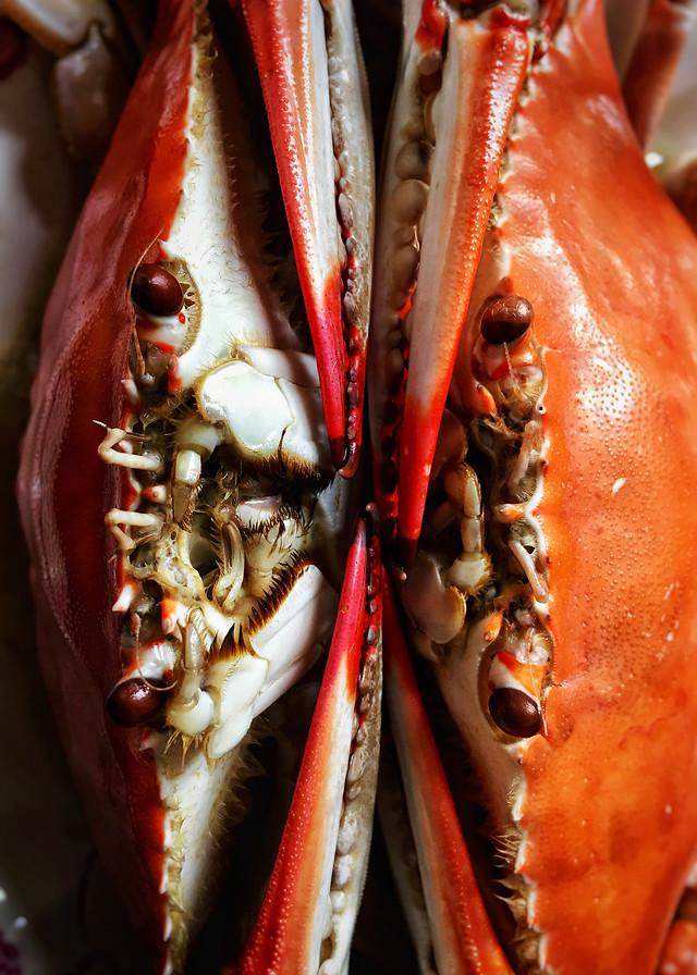 no-person-seafood-fish-food-shellfish 图片素材