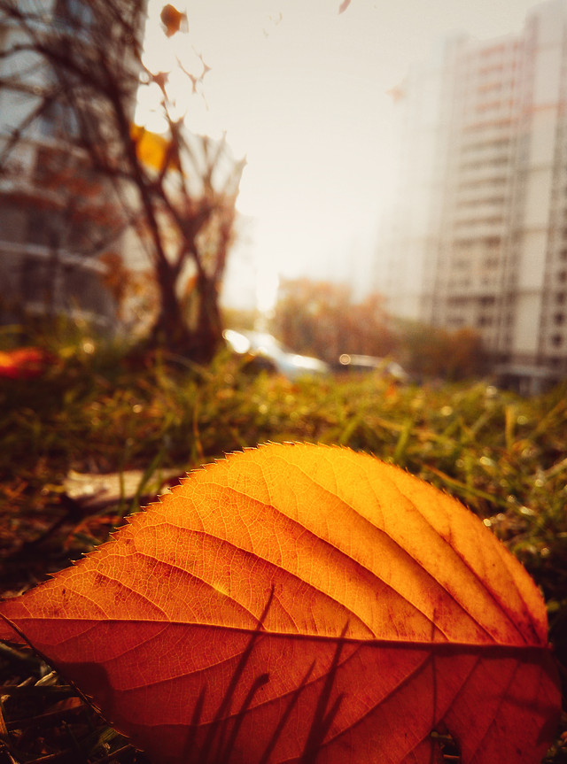 fall-leaf-no-person-rain-outdoors picture material