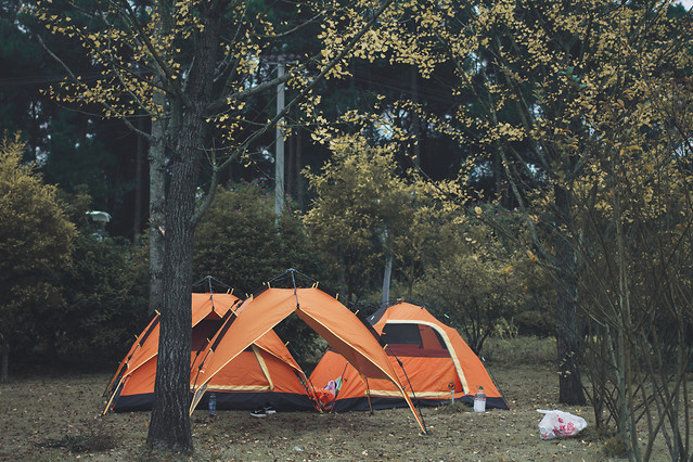tent-no-person-tree-camping-outdoors picture material