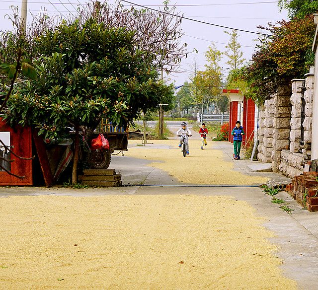 street-tree-travel-house-building picture material