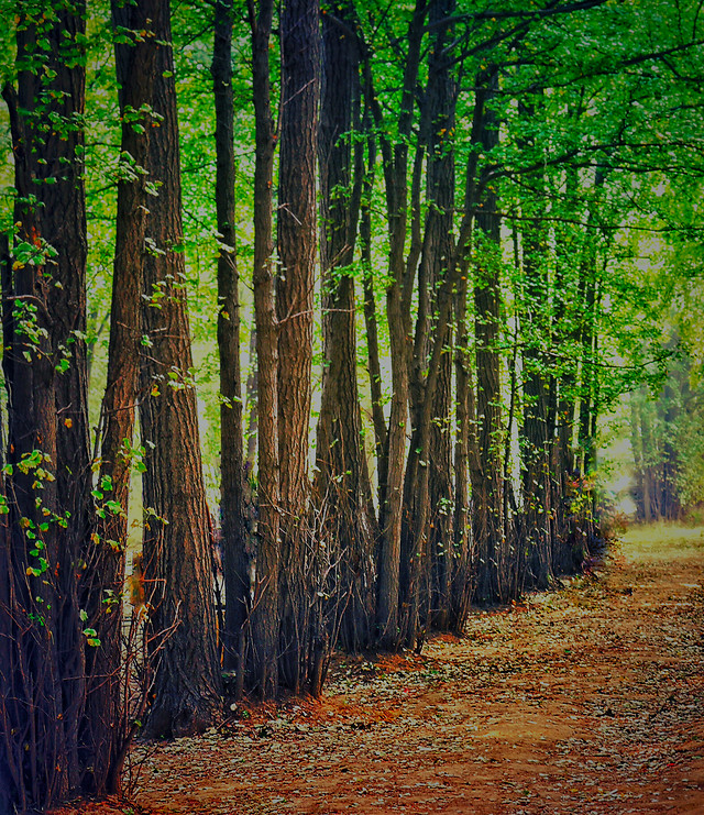 wood-nature-landscape-leaf-tree picture material
