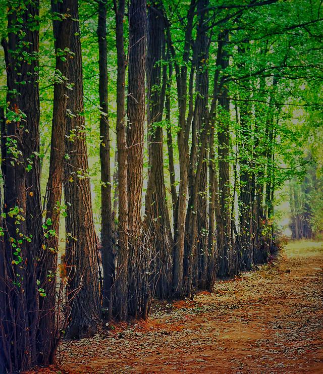 wood-nature-landscape-leaf-tree 图片素材