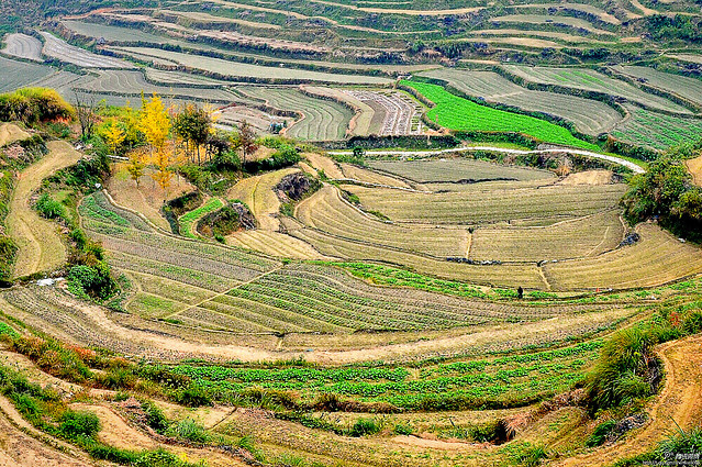 agriculture-farm-landscape-field-countryside picture material
