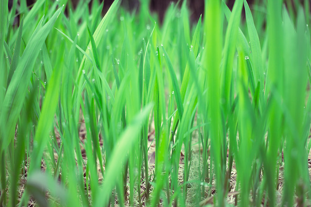 grass-growth-lush-flora-lawn 图片素材