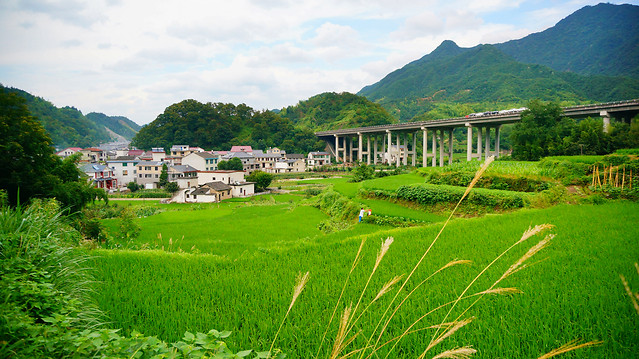 travel-landscape-nature-rice-agriculture picture material