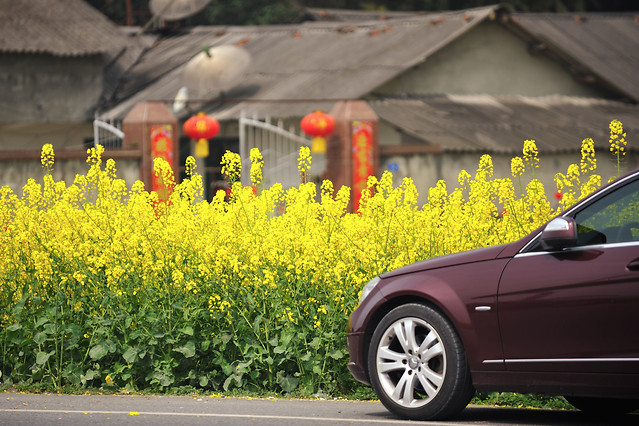 car-flower-landscape-motor-vehicle-plant picture material