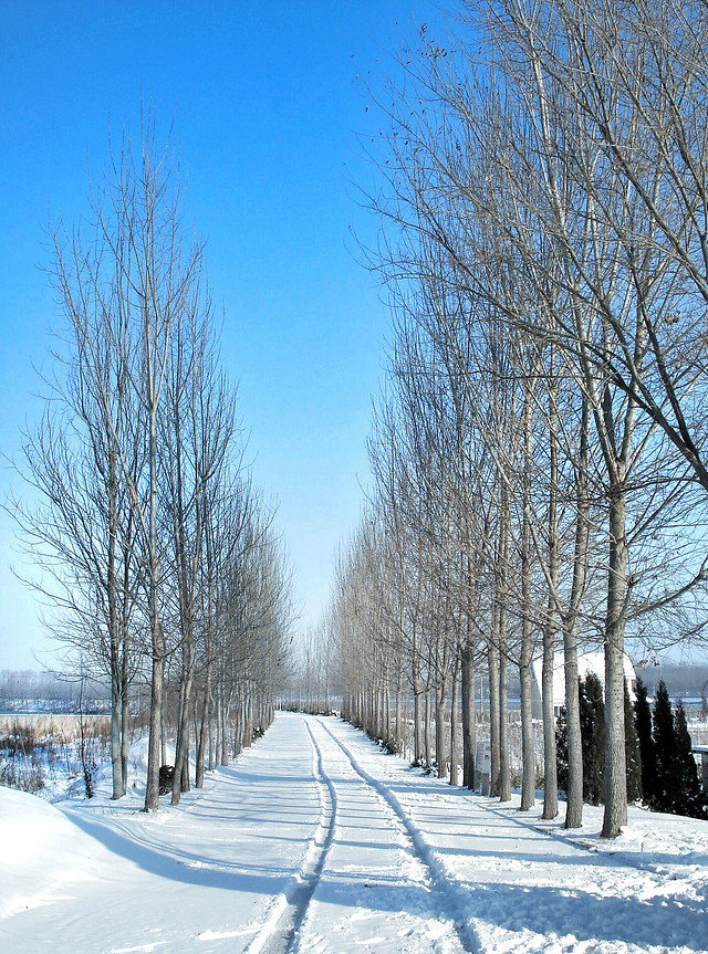 snow-winter-cold-frost-frozen 图片素材