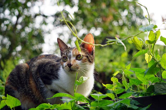 nature-animal-cat-cute-pet picture material