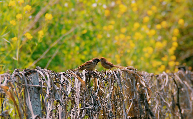 nature-bird-outdoors-wildlife-animal picture material