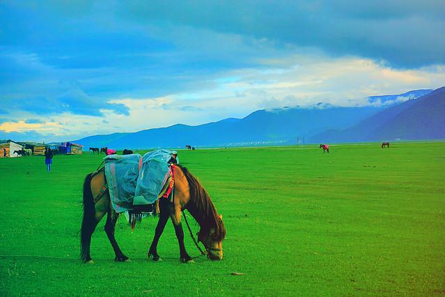 grassland-landscape-ecosystem-pasture-sky picture material