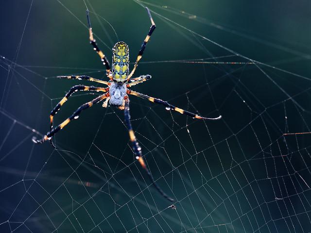 spider-spiderweb-arachnid-trap-cobweb picture material