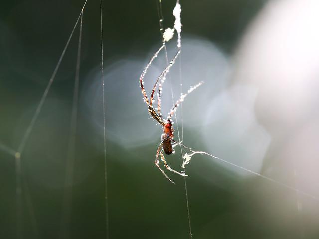 spider-insect-arachnid-spiderweb-creepy picture material
