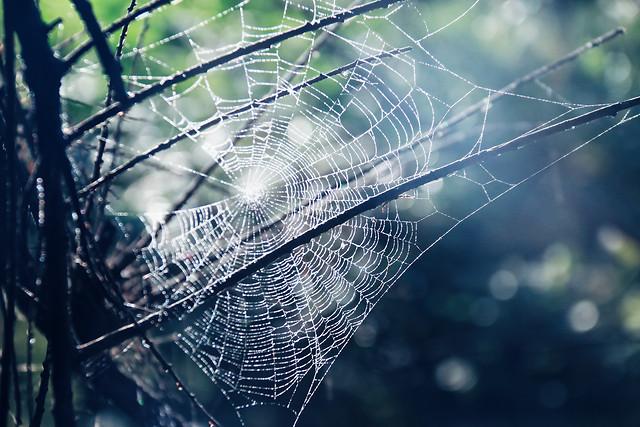 spiderweb-spider-trap-cobweb-web picture material