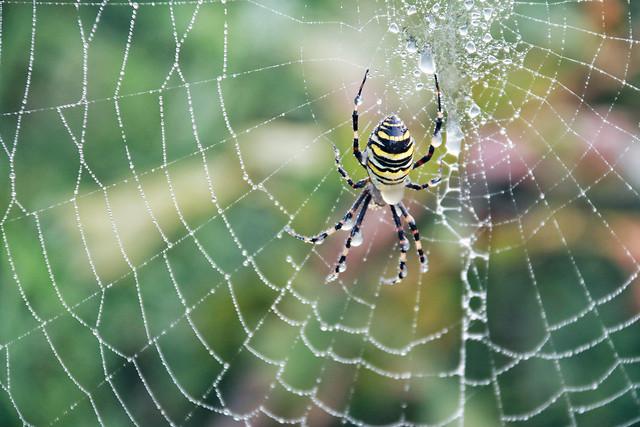 spider-spiderweb-trap-arachnid-cobweb picture material