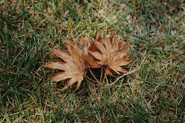 leaf-fall-nature-flora-no-person picture material