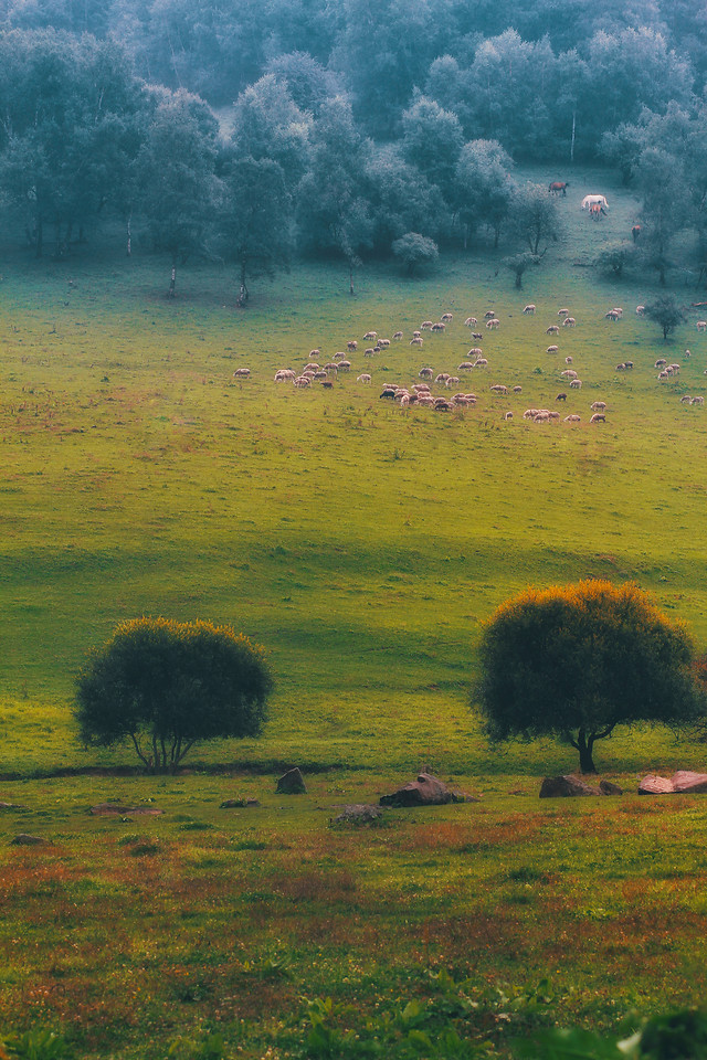 no-person-landscape-outdoors-grassland-grass 图片素材