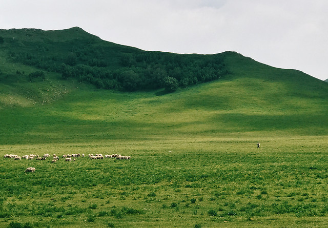 landscape-no-person-agriculture-grassland-hill 图片素材