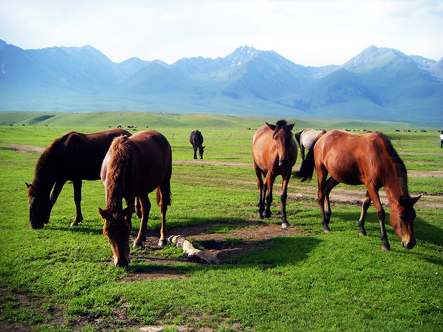 pasture-mare-grass-hayfield-farm picture material