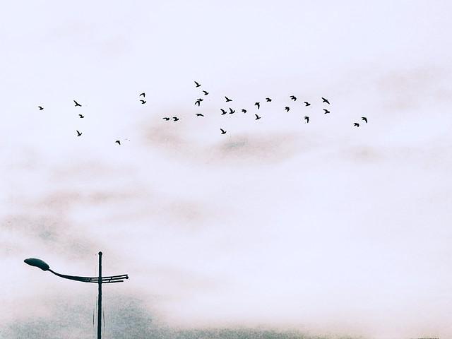 bird-sky-flight-snow-winter picture material