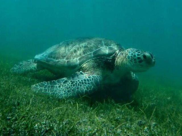 underwater-turtle-nature-ocean-sea 图片素材