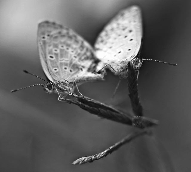 insect-butterfly-antenna-nature-animal picture material