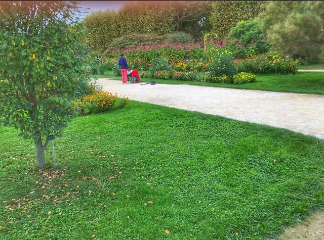 grass-garden-lawn-landscape-flower picture material