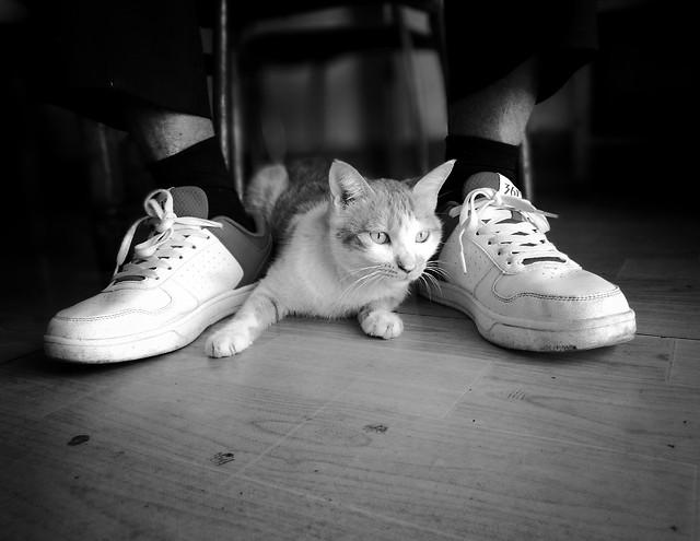 cat-monochrome-kitten-portrait-street picture material