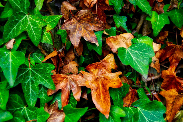leaf-fall-nature-flora-season 图片素材