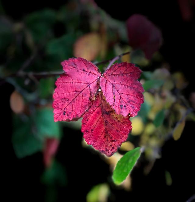 leaf-color-flower-nature-flora picture material