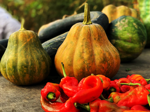 pumpkin-fall-no-person-food-vegetable picture material