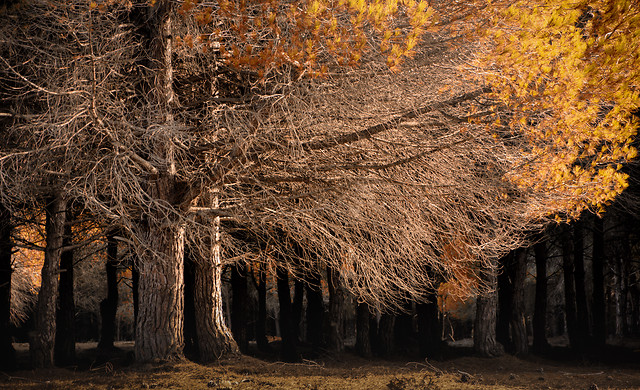 fall-tree-no-person-wood-winter 图片素材