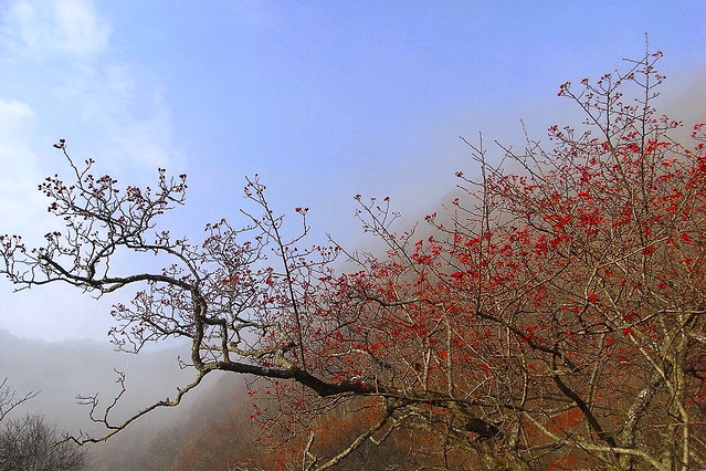 tree-branch-leaf-fall-landscape picture material