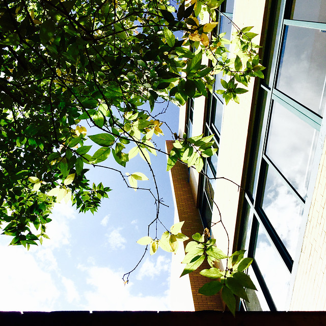 leaf-growth-flora-tree-window picture material