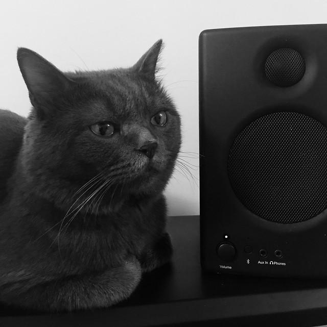 cat-domestic-black-studio-black-white picture material