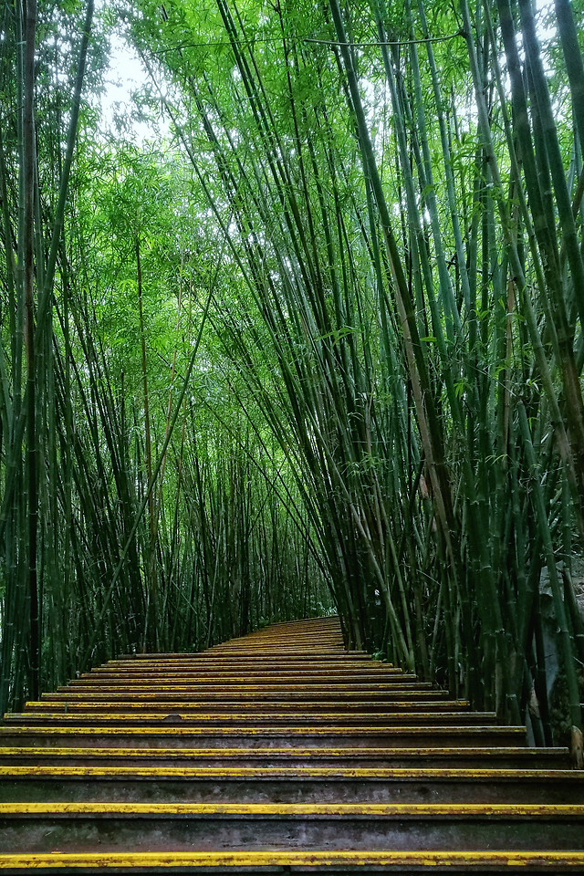 wood-bamboo-leaf-nature-tree picture material