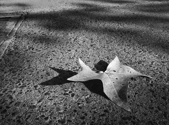 no-person-white-black-and-white-black-monochrome-photography picture material
